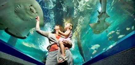 mooloolaba-underwater-world