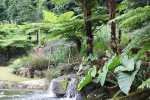 Maleny Aviary and Botanic Gardens