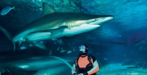 Conquering Fears – Shark with the Diving
