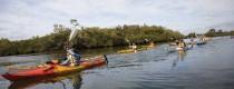 maroochy_canoes