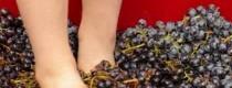 squashing grapes