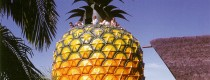 The Big Pineapple Nambour