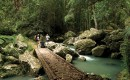 Sunshine Coast Hinterland - Trail