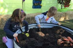 kids gardening sweet potatoes