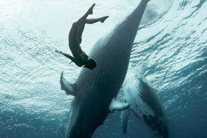 International Ocean Film Tour_ 2020